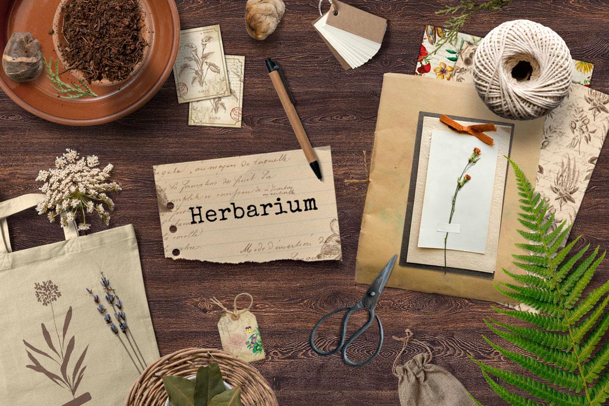herbarium-box-giugno